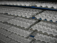 accept custom order and eco-friendly recycled molded pulp tray for egg