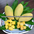 FRESH AND FROZEN MANGO FRUITS-BEST PRICES