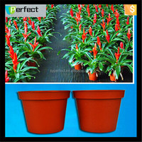 High Quality Plant pot, flowerpot from plastic , plastic flower pot
