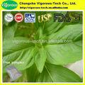 100% natural albahaca hoja de extracto en polvo 4:1 10:1 20:1/ocimum tenuiflorum p. E.