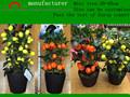 Künstlichen fake mini-frucht Baum/Kunststoffen kleine mini-kalk Baum/künstliche grapefruit Baum/dekorativen mini orangenbaum