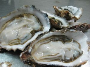 how to prepare frozen oysters on the half shell