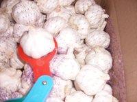 2013 china laiwu garlic price