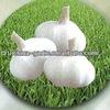 2015 China Fresh Pure White Garlic ( white garlic from China)