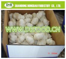 Chinese fresh garlic natural garlic 4.5cm-6.5cm 2015 fresh white garlic exporter in china