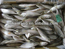 Frozen Jack Mackerel china fish