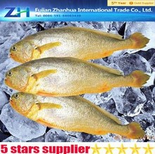Whole round seafood yellow croaker, yellow croaker frozen, fresh fish yellow croaker