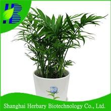 Samll palm tree seeds for indoor growing