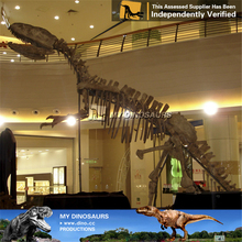MY DINO-M09 Zigong found fossil dinosaurs