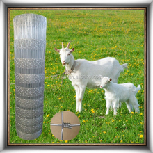Type of mesh fence for sheep