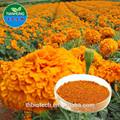 china 2015 fabricante natural puro de alta calidad precio de la luteína