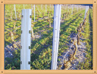 vineyard post use for grape plantation