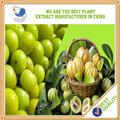 Hierba natural 60% extracto de la fruta garcinia cambogia