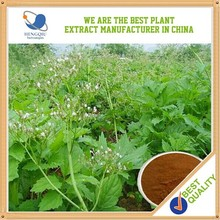 Herbal Medicine 0.5% valeric acid valeriana officinalis extract Chinese Herb Extract Supplier
