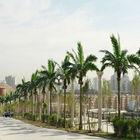 Grande Ao ar Livre artificial coqueiro com cocos para decoração