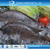 new arrival wholesale health red and black tilapia