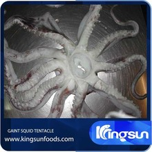 Hot Sale Frozen Giant Squid Tentacle Dosidicus Gigas