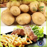 certified fresh dutch sweet potato 100-200g price for export