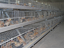 Baby chicken cage/ birds cage/ poultry farm equipment