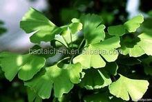 herbs extract Ginkgo biloba extract