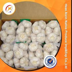 Chinese Fresh Normal Garlic 5.0 Cm 5.5cm