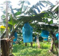 increase productions China Guangdong leading supplier banana cover bag banana protection bags