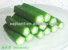 GMP Manufacturer High Quality &100% natural organic okra seed oil (cold press)