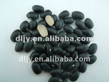 New Chinese Small Black Beans 2011 (white kernel )
