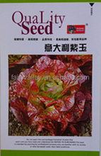 Purple Red Leaf Lettuce Seed For Planting The Royal Healthy Vegetable-Italy Purple Jade
