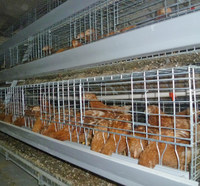 Chicken and pullet bird cage automatic machine