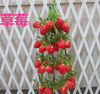 Artificial String Strawberry Faux Fruit Fake Strawberry Vine Garlands House Decor-Yiwu sanqi crafts factory