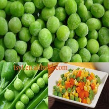 competitive exporter of frozen vegetable and fruit frozen green bean ,iqf green bean , frozen green bean