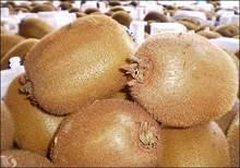 kiwi fresco de frutas