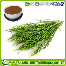 Free sample GMP manufactory hot sale new product herb medicine 100% natural horsetail grass extract