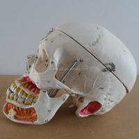 HOT SALES advanced Human skull with blood model skull