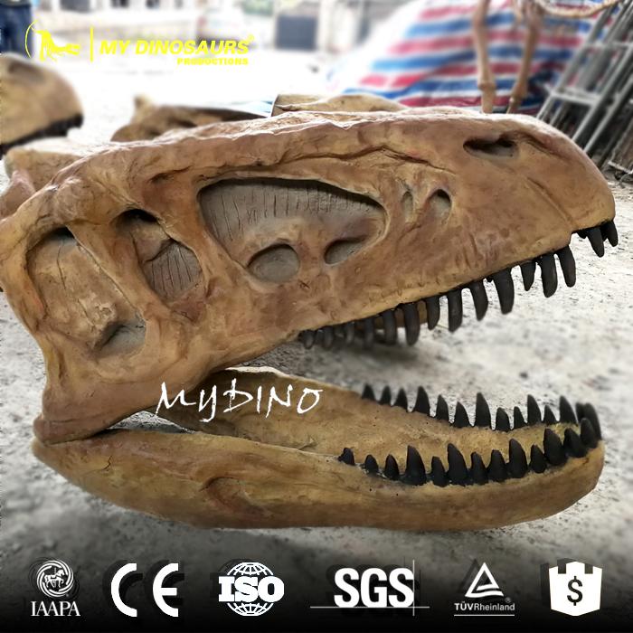 Dinosaur Head Fossil 1.jpg