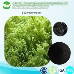 100% health natural pure bulk seaweed extract fertilizer/sargassum seaweed fertilizer/fertilizer sargassum seaweed fertilizer