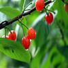 2015wholesale dog air freshener artificial cherries
