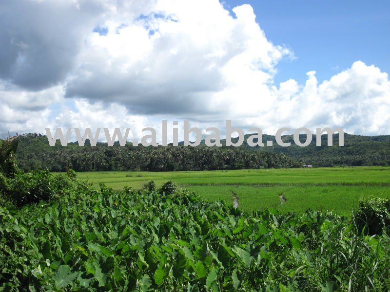 Caticlan / Malay Philippines  City pictures : Farm Land Boracay Caticlan Aklan Buy Farm Land Product on Alibaba ...