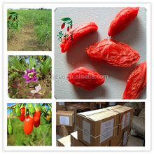 High Quality (SO2 Free) Goji Berries, EU Certified Organic goji, certified factory, HACCP goji , wolfberry juice, goji oil, goji