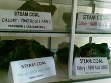 Steam Coal Non Cooking Origin Indonesian