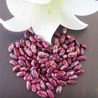 China Competitive Price Dried Black Purple Speckled Kidney Beans