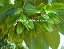 Chlorogenic Acid 10% 20% 30% 98% // Eucommia ulmoides Oliv extract