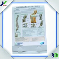human anatomy model 3D Medical Poster / 3d wall poster / 3d pvc poster