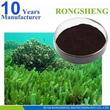 Alta calidad orgánica extracto de algas marinas
