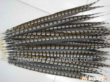 Colourful Ringneck Pheasant Feather