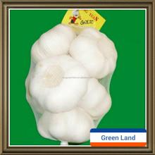 fresh natural white garlic