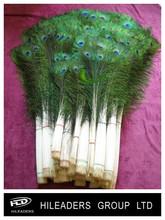 venta al por mayor teñido de la decoración de plumas de pavo real lo141