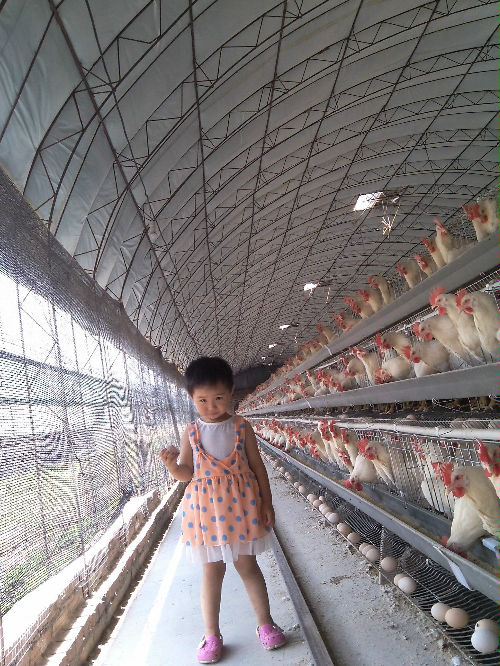 A Type Multi-tier Poultry Cages For Layer Chickens Type And Q235 ...