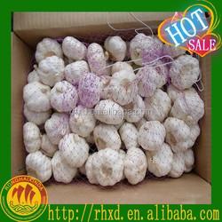 white garlic price/fresh garlic